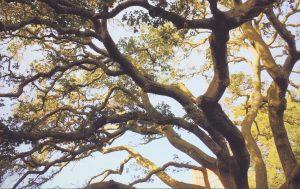potatura di alberi arbusti siepi