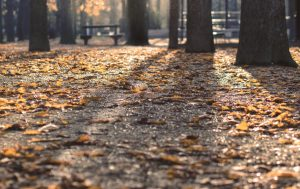 pulizia e raccolata fogliame da parchi e luoghi pubblici