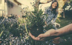 formazio e e ristrutturazione dei giardini